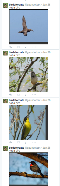 It's funny, because it's tweeting images of birds.
